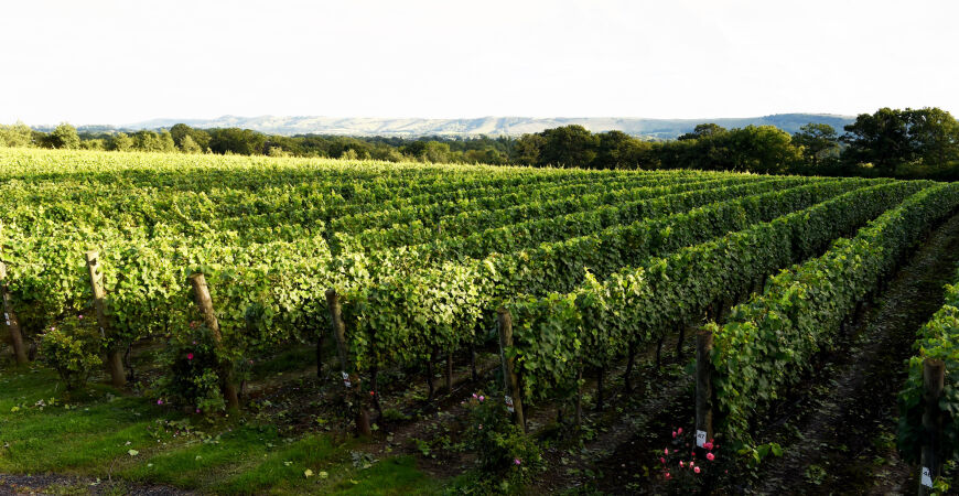 Behind the Scenes: Ridgeview Winery (members only, in person)